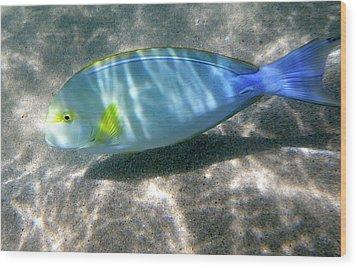 Blue And Yellow Hawaiian Reef Fish Wood Print by Erika Swartzkopf