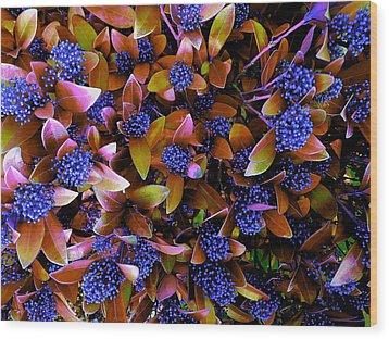 Blue Berries Wood Print