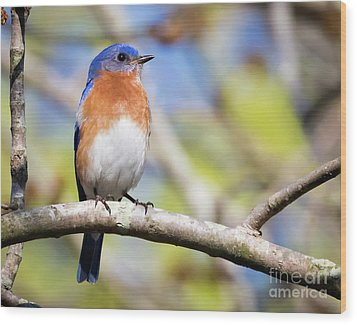 Wood Print featuring the photograph Blue Bird by Ricky L Jones