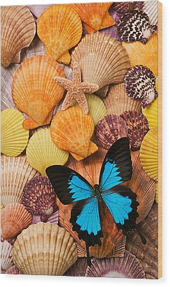 Blue Butterfly And Sea Shells Wood Print by Garry Gay
