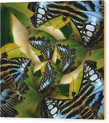 Blue Butterfly Collage Wood Print by Irma BACKELANT GALLERIES