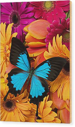 Blue Butterfly On Brightly Colored Flowers Wood Print