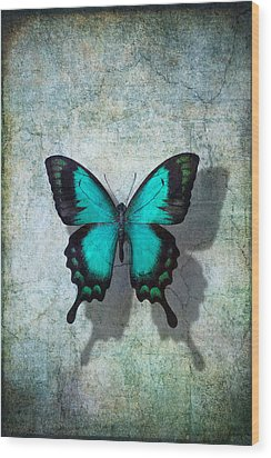 Blue Butterfly Resting Wood Print