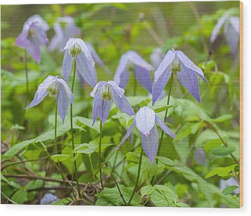 Wood Print featuring the photograph Blue Clematis by Fran Riley