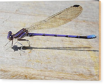 Wood Print featuring the photograph Blue Damselfly by Margie Avellino