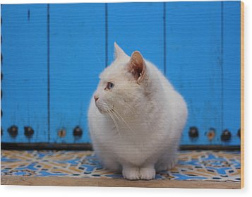 Wood Print featuring the photograph Blue Door White Cat by Ramona Johnston
