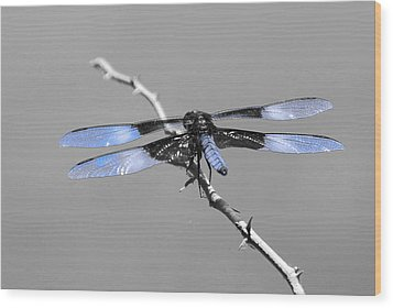 Wood Print featuring the photograph Blue Dragon by Cindy Manero
