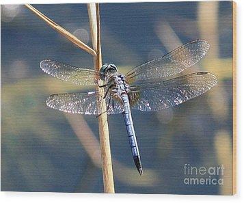 Blue Dragonfly Wood Print by Carol Groenen
