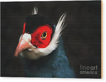 Blue Eared Pheasant Wood Print by Jack Torcello
