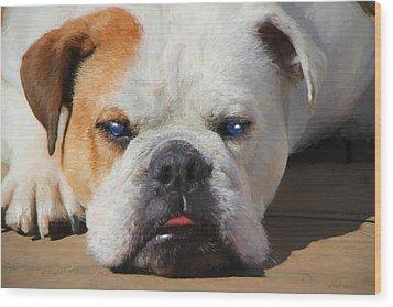 Blue-eyed English Bulldog - Painting Wood Print