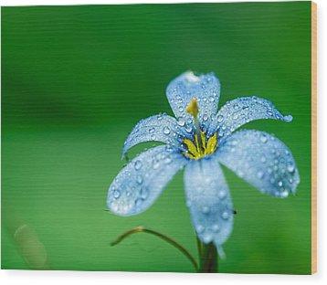 Blue Eyed Grass Flower Wood Print