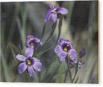 Blue Eyed Grass Wood Print