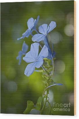 Blue Flower Wood Print
