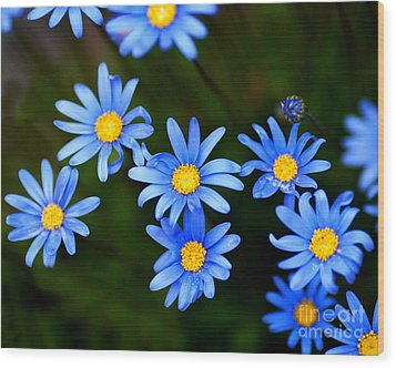 Blue Flowers Wood Print by Wingsdomain Art and Photography
