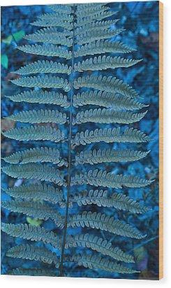 Blue Frond Wood Print by Douglas Barnett