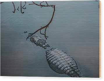 Blue Gator Wood Print by Josy Cue