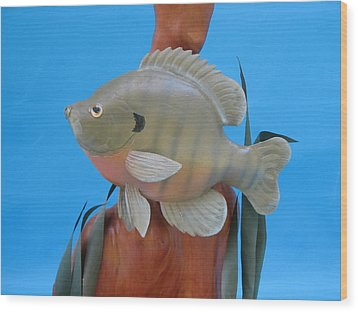 Blue Gill Wood Print by Jack Murphy
