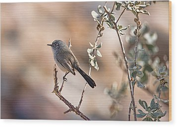 Wood Print featuring the photograph Black-tailed Gnatcatcher by Dan McManus