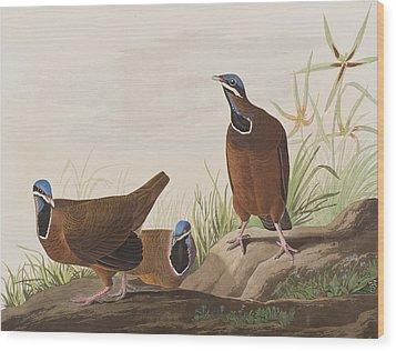 Blue Headed Pigeon Wood Print
