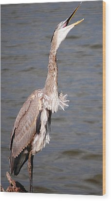Blue Heron Calling Wood Print by Sumoflam Photography
