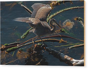 Blue Heron Fishing Wood Print