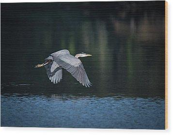 Blue Heron Flying Wood Print
