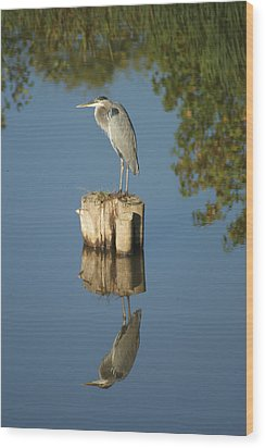 Blue Heron Wood Print by Heidi Poulin