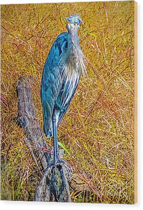 Wood Print featuring the photograph Blue Heron In Maryland by Nick Zelinsky