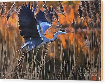 Blue Heron Wood Print by Jack Torcello
