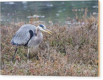 Blue Heron On The Hunt Wood Print by Eddie Yerkish