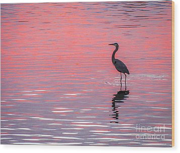 Blue Heron - Pink Water Wood Print by Tom Claud