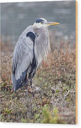 Blue Heron Portrait Wood Print by Eddie Yerkish