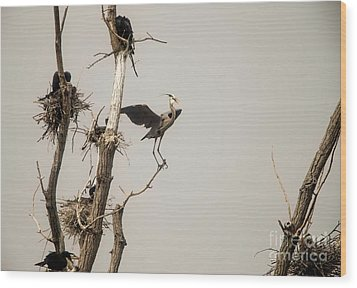 Wood Print featuring the photograph Blue Heron Posing by David Bearden