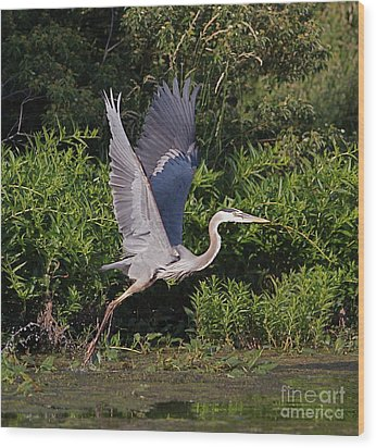 Blue Heron Wood Print by Robert Pearson