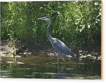 Blue Heron Wood Print by Ron Read