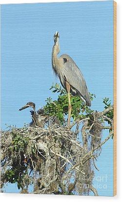 Wood Print featuring the photograph Blue Heron Series Baby 2 by Deborah Benoit