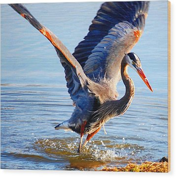 Blue Heron Wood Print by Sumoflam Photography
