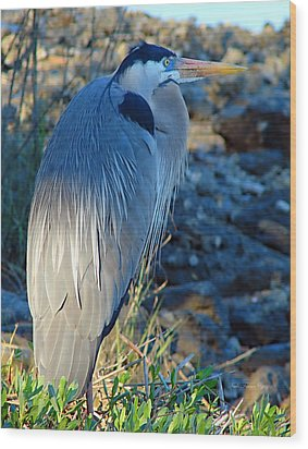 Blue Heron Visions Wood Print by Nada Frazier