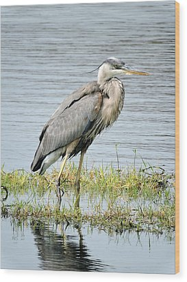 Wood Print featuring the photograph Blue Heron by William Albanese Sr
