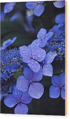 Blue Hydrangea Wood Print by Noah Cole