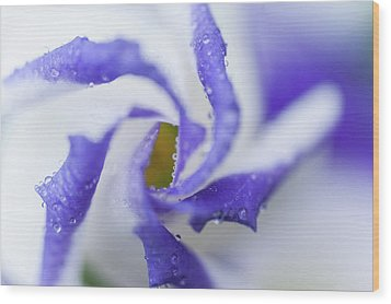 Wood Print featuring the photograph Blue Inspiration. Lisianthus Flower Macro by Jenny Rainbow