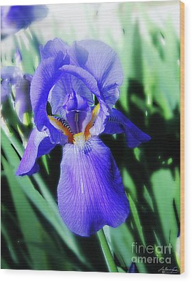 Blue Iris 2 Wood Print by Lizi Beard-Ward