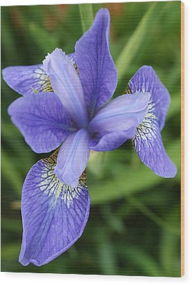 Wood Print featuring the photograph Blue Iris 5 by Bruce Bley