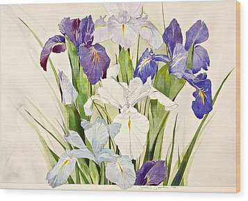 Blue Irises-posthumously Presented Paintings Of Sachi Spohn  Wood Print