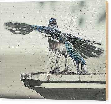 Blue Jay Bath Time Wood Print