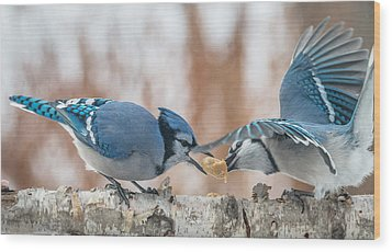 Blue Jay Battle Wood Print by Patti Deters