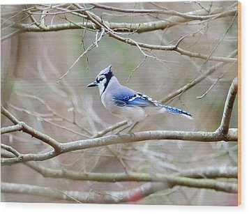 Blue Jay Wood Print by George Randy Bass