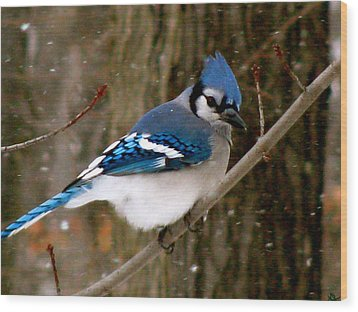 Blue Jay In The Snow Wood Print