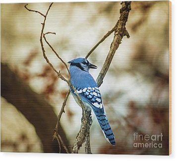 Blue Jay Wood Print by Robert Frederick
