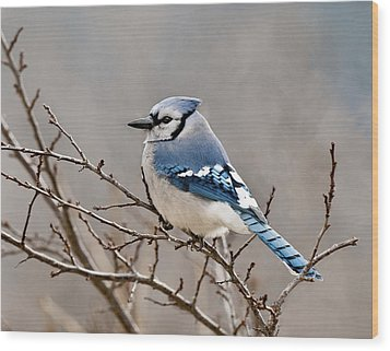Blue Jay Way Wood Print by Lara Ellis